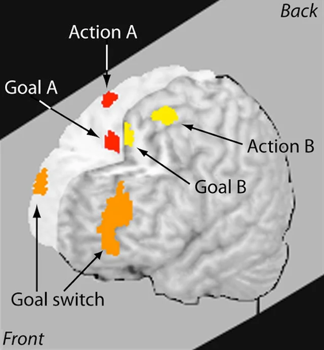 What is going on in our brains when we multitask?